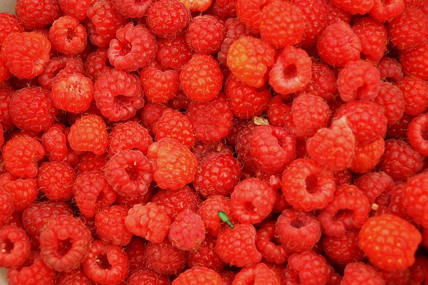 Freshness Beauty In Nature Fruit Photography Raspberry♥ Rasperry Raspberries Fruit Backgrounds Red Healthy Lifestyle Full Frame Biology Ripe Citrus Fruit Close-up Food And Drink Vitamin C Berry Fruit Rowanberry Juicy Grapefruit Strawberry Berry Raspberry Red Currant Sour Taste Vitamin Blackberry