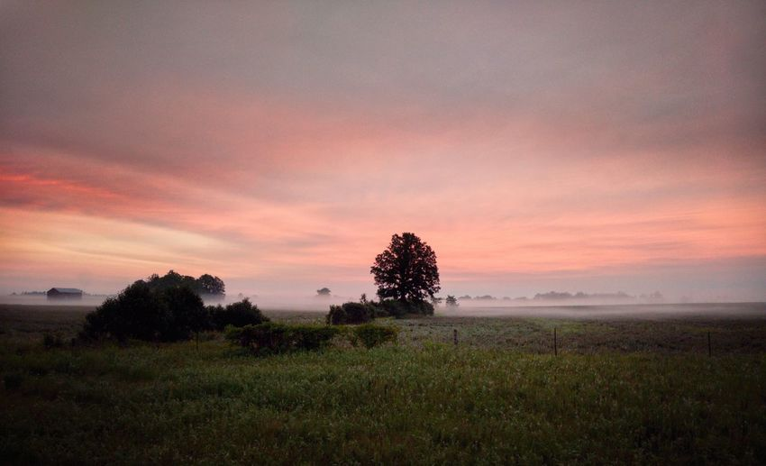 Blessed Ontario Canada Canadian Epic EyeEm Best Shots EyeEm Gallery Eye4photography  Foggy Mood Morning Blue Hour Golden Hour Nikon D7500 The Great Outdoors - 2019 EyeEm Awards Tree Sunset Rural Scene Field Agriculture Silence Single Tree Grass Sky Landscape Fragility