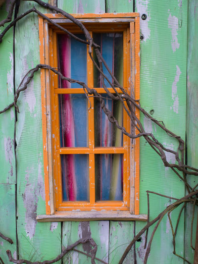 Orange window on a green wall Branches Architecture Green Color Growing Over Orange Window Window Window Frame Wooden Window
