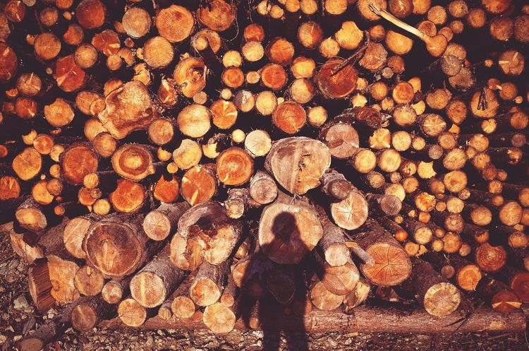 Timber Deforestation Lumber Industry Log Pattern Large Group Of Objects Full Frame Outdoors Miles Away Low Section Dolomites South Tyrol Südtirol Daily Business  Patterns Country Living Fallen Trees Industry Wood Industry The City Light TCPM