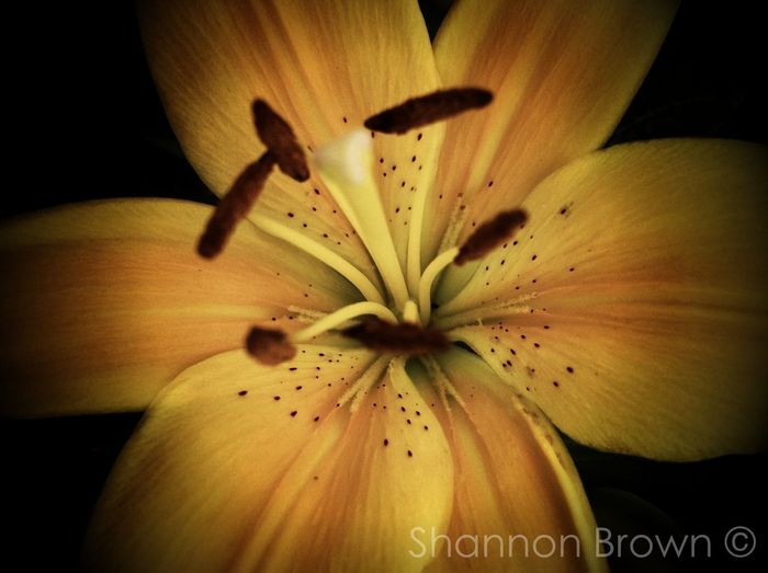 Spring Flowers Shootermag Ready For My Close Up EyeEm Best Shots