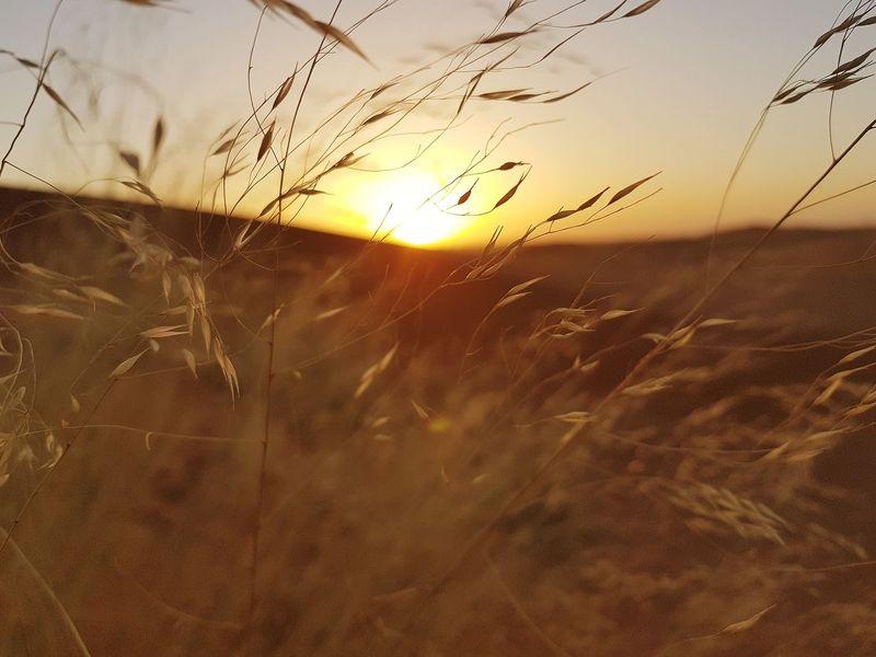 Nature Sky Sunlight Day Outdoors Grass Tranquility Growth جمال Sands Beauty In Nature طبيعة No People Suny شجر نبات نباتات برية صحراء غروب شروق شمس Desert Sun Sunset The Great Outdoors - 2017 EyeEm Awards