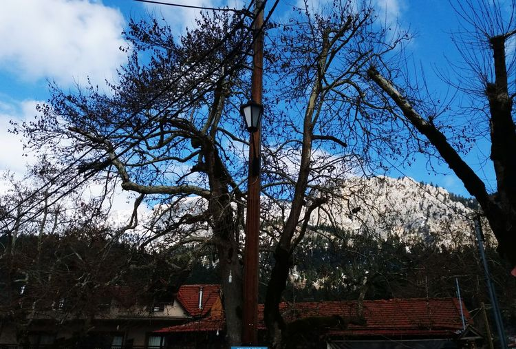 Village up in the mountains Shades Of Winter Trees Winter Electricity Pole Electricity Wires Montains    Sky Cloud Building Houses Inns Rural Low Angle View Tree Day Sky No People Outdoors Nature