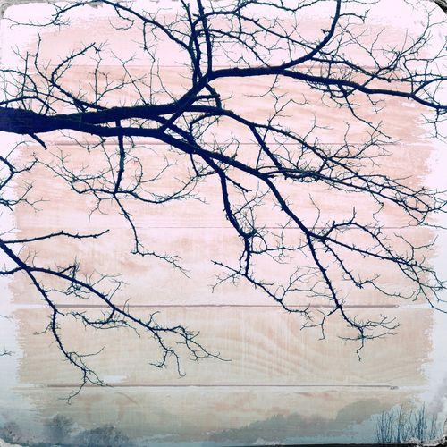 Full frame shot of bare tree against wall