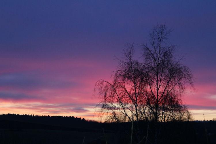 Sunset Tree No People Walburg Sky