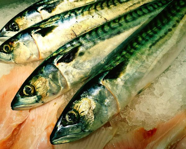 Pretty Fish Mackerel Fishes Beautiful Fish Fish Fresh Whole Fish Foodphotography