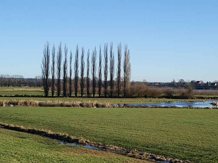 Sky Nature Tree Trees Trees In A Row