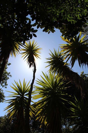 Backgrounds Beauty In Nature Blue Blue Sky Domaine Du Rayol Green Color Low Angle View Nature No People Outdoors Palm Tree Soleil Vert Sun The Great Outdoors - 2016 EyeEm Awards Tranquil Scene Tranquility Var, France