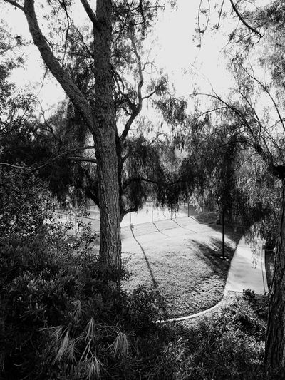 A small park in Santa Clarita 2, (b&w) Blackandwhite Santa Clarita IPhoneography Tree Plant Nature Day Growth No People Outdoors Sunlight Sky Land Tranquility Beauty In Nature Branch Field Tree Trunk Low Angle View Trunk Tranquil Scene Clear Sky