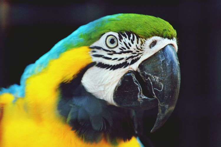 Parrot My Parrot Amazon Parrot Colorful Parrot