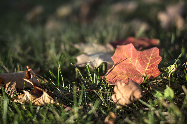 #fallenleaf Autumn Collection Autumn Colors Autumn Leaves Colors Of Autumn Fall Beauty Fall Colors Fall_collection Leaves On The Ground No Filter Orange Leaf Orange Leaves