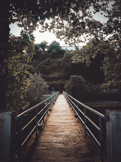 Footbridge along trees in village