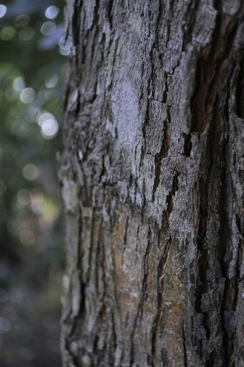 Bonitas texturas de árvores Tree