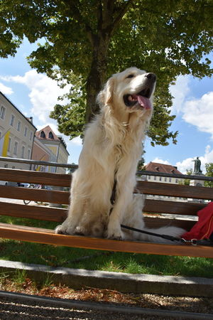 Dogs Golden Golden Retriever Parkbank Passau Vacations Animal Themes Architecture Building Exterior Built Structure Day Dog Domestic Animals Mammal Nature No People One Animal Outdoors Parkbankchilling Pause Pets Sitting Sky Travel Destinations Tree