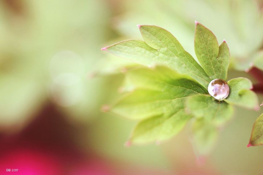 Green Color Macro Photography Beauty In Nature Plant Nature Photography Goutte D'eau