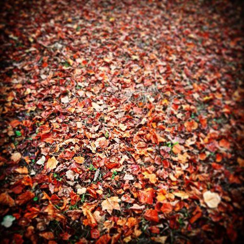 ...autunno First Eyeem Photo