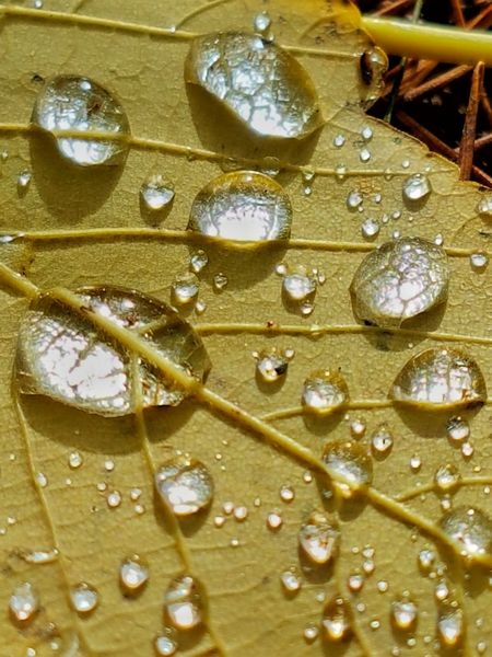 Autumn jewels. Full Frame Backgrounds Drop No People Wet Water Close-up Nature Freshness Yellow Beauty In Nature Day Leaf Leafs Photography Leaf Vein Autumn Autumn Colors Autumn Leaves Water Droplets Water Drops On Leaves EyeEm Ready