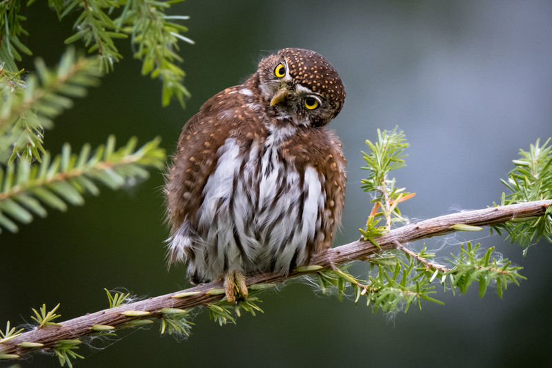 Low angle view of owl perching on tree