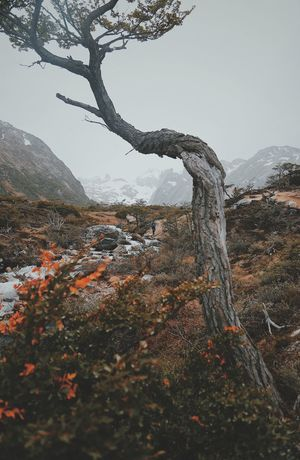 Tree Plant Nature Tranquility Sky Tree Trunk Beauty In Nature Trunk Mountain Tranquil Scene Land Day Scenics - Nature No People Outdoors Environment Water Non-urban Scene