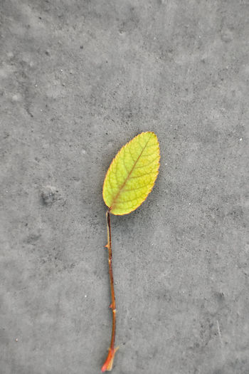 High angle view of yellow leaf on concrete