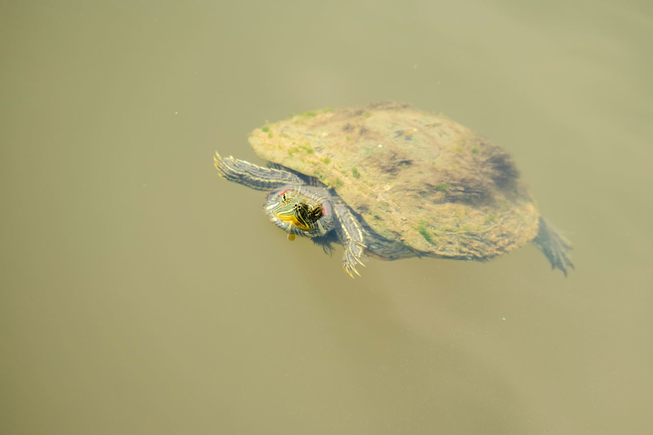 one animal, animal themes, animals in the wild, insect, no people, nature, animal wildlife, water, close-up, outdoors, day