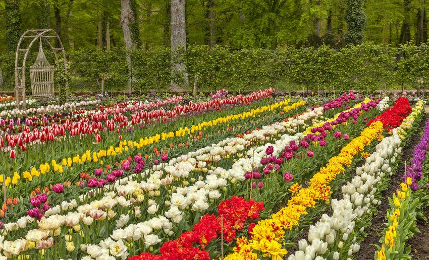 Flowers garden Flower Plant Flowering Plant Multi Colored Ornamental Garden Beauty In Nature Freshness Landscape Vibrant Color Springtime Formal Garden Environment Garden Spring Season  Seasonal Chenonceau Outdoors