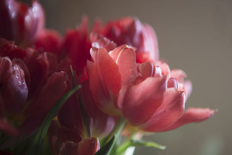 50 Shades Of Flowers 50 Shades Of Pink Parrot Tulip Tulips Beauty In Nature Bunch Of Flowers Close-up Flower Flower Arrangement Flower Head Flowering Plant Flowers Focus On Foreground Fragility Freshness Parrot Tulips Petal Softness Vulnerability