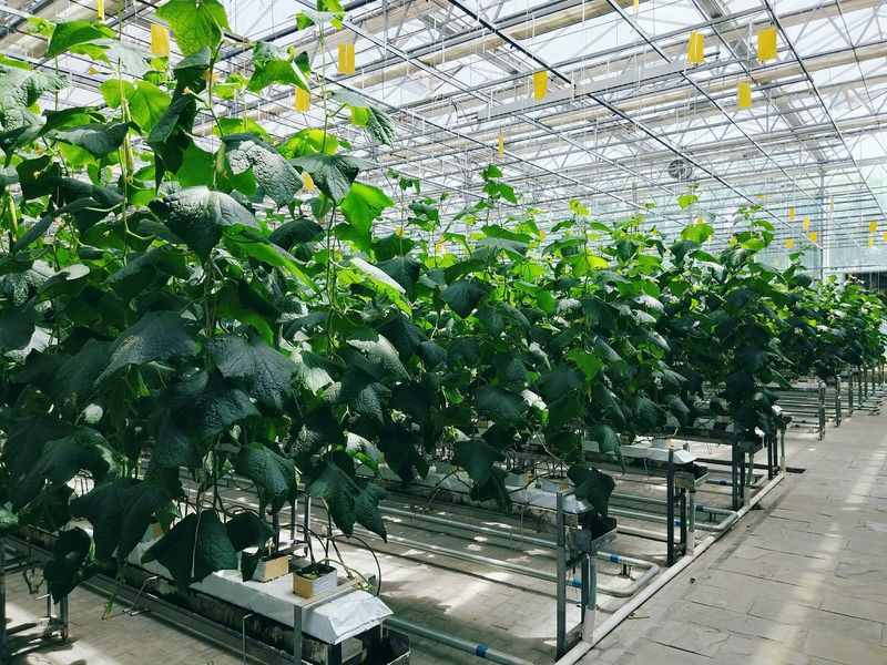 Growth Green Color Nature Plant Factory Vegetable Greenhouse Plants Green Leaves Develop Sprout Sprouting Seeds Freshness Agriculture Network Server Sprouts Nature Plant Nursery Growth Green Color Greenhouse Group Of Objects Green Built Structure Modern