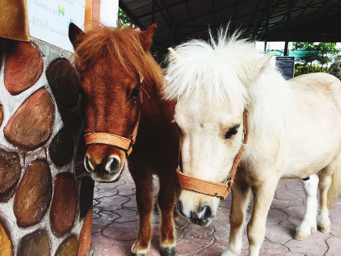Pony EyeEm Selects Animal Mammal Animal Themes Domestic Animals Vertebrate Domestic Pets Livestock Group Of Animals Two Animals Portrait Animal Wildlife Looking At Camera Close-up Day Horse Herbivorous No People Animal Head  Outdoors