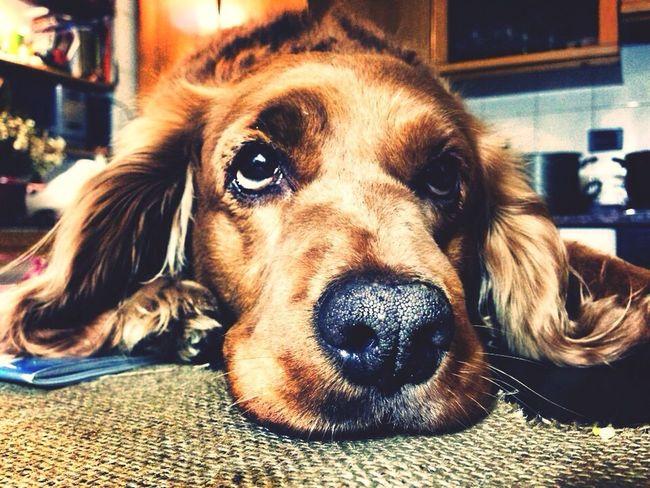 Dog Taking Photos Photo Photography Photooftheday Shoot Ayla  Puppy Cute Pets Hello World Hi! Relaxing