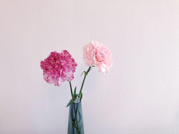 Flower Flowering Plant Plant Vulnerability  Beauty In Nature Fragility Freshness