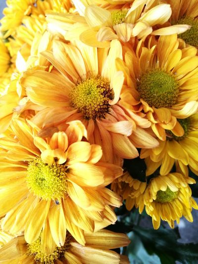 Sunflowers Flower Head Flower Petal Beauty In Nature Nature Outdoors Yellow