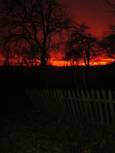 Sunset Endoftheday RedSky Trees Beautiful Nature EyeEm Nature Lover Trees And Sky Beautiful View Magicsky Eyemnaturelover OldFence