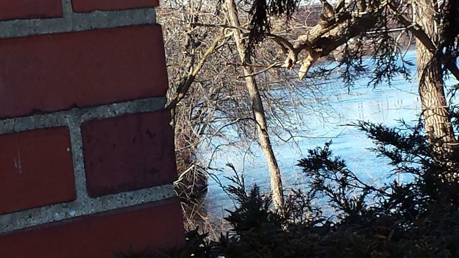 close up of orange-red brick building side trees branches frame blue river surface no people Day Beauty In Nature Outdoors Textured  Built Structure Auburn, Maine, USA