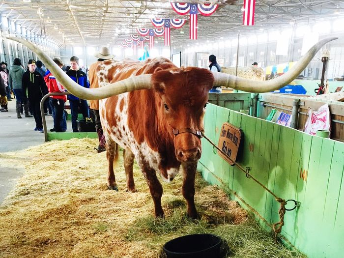 Fort Worth Stock Show Rodeo 2016 FWSSR