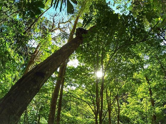 Tanpa bunga tidak akan ada taman, Tanpa taman bumi tidak akan indah, Tanpa pohon tidak akan ada hutan, Tanpa hutan kita tak bisa bernafas,. . . 📍 Tunan - MINUT - SULUT 📷 YiCam Yicamera IManado Hutan Manado Sulawesiutara INDONESIA