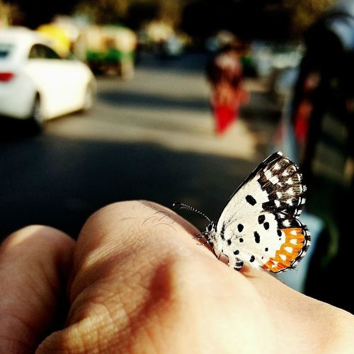 Beauty of Nature Human Hand Lifestyles Nature The Great Outdoors - 2017 EyeEm Awards The Street Photographer - 2017 EyeEm Awards Buterfly 🌺🌺🌺 Butterfly - Insect Butterfly Closeup Mobilephotographer DelhiGram Motog4plus,❤ Creative Photography Mobile Photography Motorolaphotography Indianshutterbugs Wow!!😋 AwesomeDay Mobile Editing Mobile_photographer Indianphotographer Break The Mold EyeEmNewHere Statue Freshness Butterfly ❤
