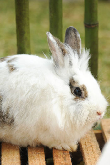 Close-up of rabbit by fence