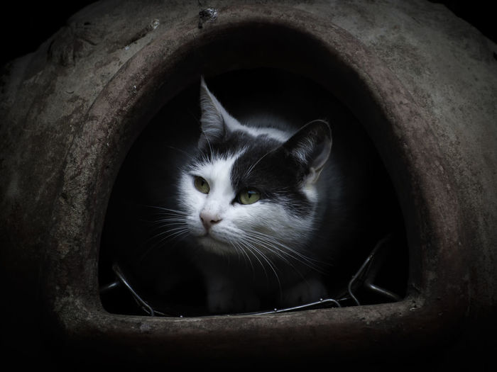 Young Black and White cat / kitten hides in the chimney pot.. ..looking at the world... with light catching her face. Very cute image Waiting Alertness Animal Animal Body Part Animal Eye Animal Head  Animal Themes Cat Close-up darkness and light Domestic Domestic Animals Domestic Cat Feline Focus On Foreground Hidden Hiding Hole Mammal No People One Animal Pets Portrait Vertebrate Whisker