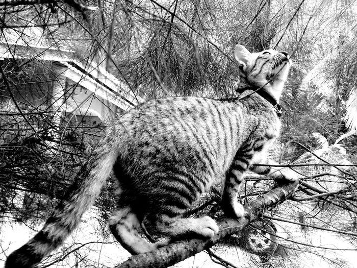 Cat sitting on bare tree