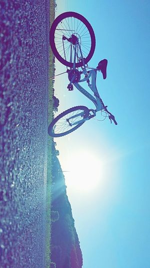 Bike Bicycle Sky Outdoors No People Day Sport Sunset Cloud - Sky Outside Clouds Blue Sky Bird Freshness Close-up Fragility Growth Tree Beauty In Nature Nature Technology Outside Photography Bike Rides The Great Outdoors - 2017 EyeEm Awards