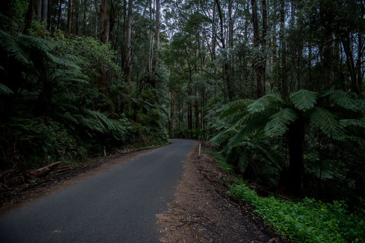Jungle Rainforest Australia Nature Forest Wildlife Wild Victoria Tree Plant Direction The Way Forward Road Land Transportation Growth No People Green Color Tranquility Beauty In Nature Tranquil Scene Day Diminishing Perspective Non-urban Scene Scenics - Nature Empty Road Outdoors WoodLand Long Treelined