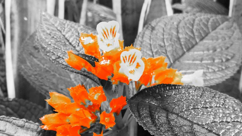I don't know know what's the name of this flower but I love it.. Mobilephotography Amateurphotography StillLifePhotography Taking Photos