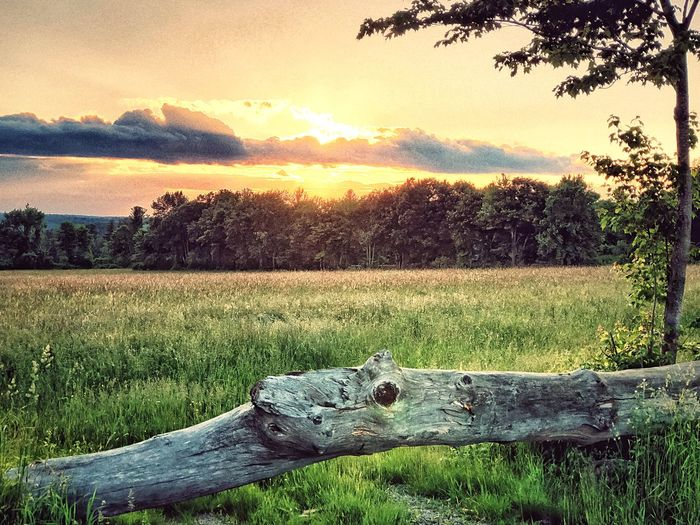 Cloud Covered Sunset in the Countryside Plant Sunset Sky Tree Beauty In Nature Growth Tranquility Nature Tranquil Scene Scenics - Nature Grass Environment Field Land Sunlight No People Landscape Green Color Outdoors Cloud - Sky