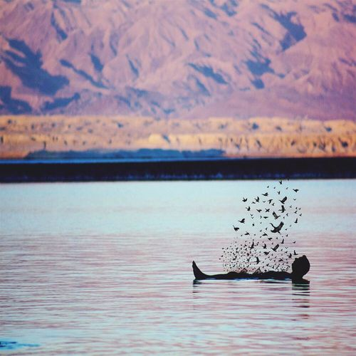 Silhouette man swimming in lake with birds against mountains
