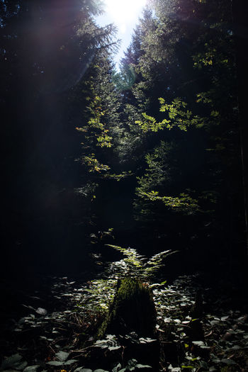 sun flare true the forest Beauty In Nature Forest Green Healtheworld Natural Nature No People Outdoors Shadow Sun Sunlight Tree