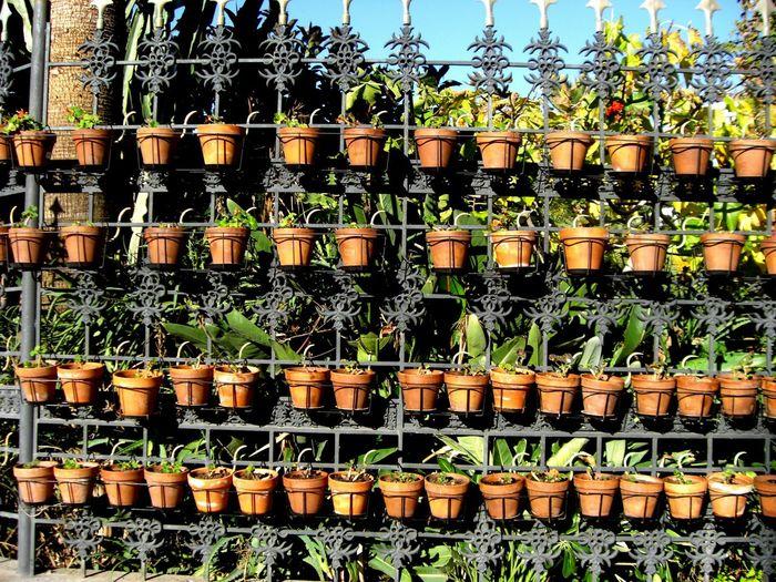 Flowers Flowerpots Streetphotography Scenery Open Edit