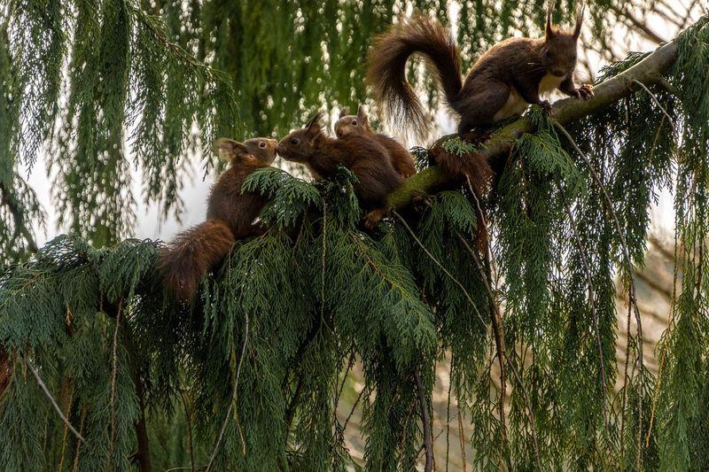 Squirrels EyeEm
