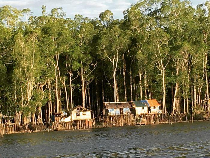 Mangrove Papua Pomako Timika INDONESIA Vilage