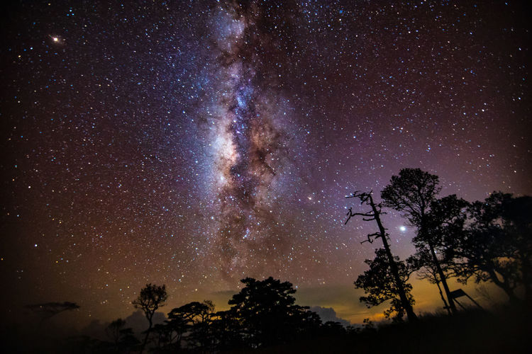 Galaxy Astronomy Beauty In Nature Galaxy Growth Low Angle View Luminosity Milky Way Nature Night No People Outdoors Plant Scenics - Nature Silhouette Sky Space Star Star - Space Tranquil Scene Tranquility Tree EyeEmNewHere